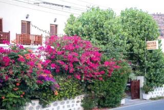gallery-villa-zacharo-garden
